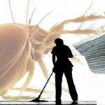 Dust Mite Cleaning